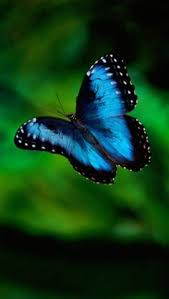 MY FAVORITE - WHEN YOU FLITTER ABOUT AND FLUTTER B