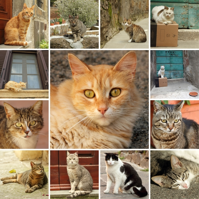 italian cats collage