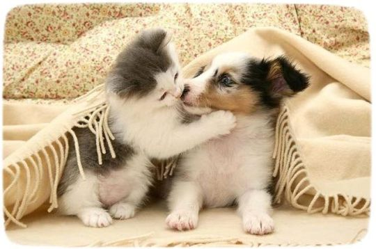 KITTEN AND PUPPY KISSING