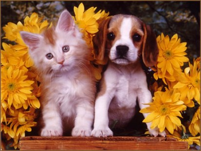 KITTEN AND PUPPY WITH FLOWERS