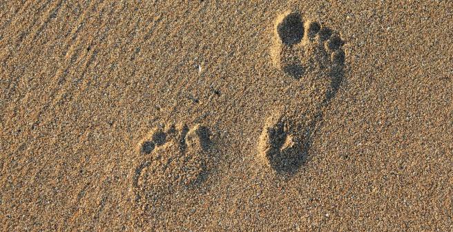 footprint-2353510_1280