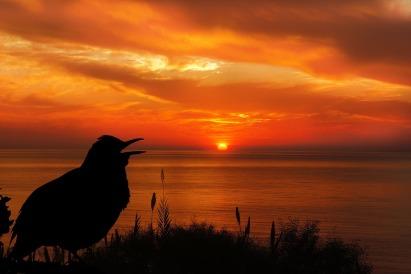 SONGBIRD AT SUNSET