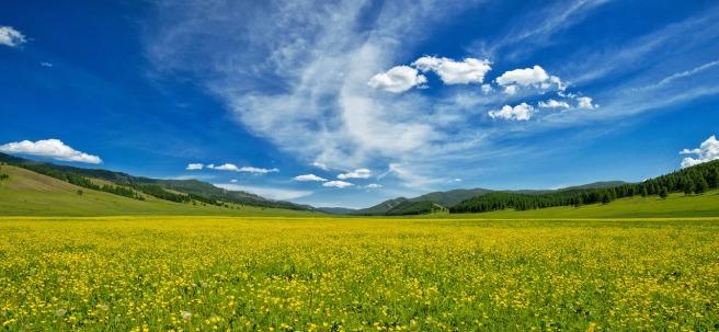 yellow-flowers-2341240_1280