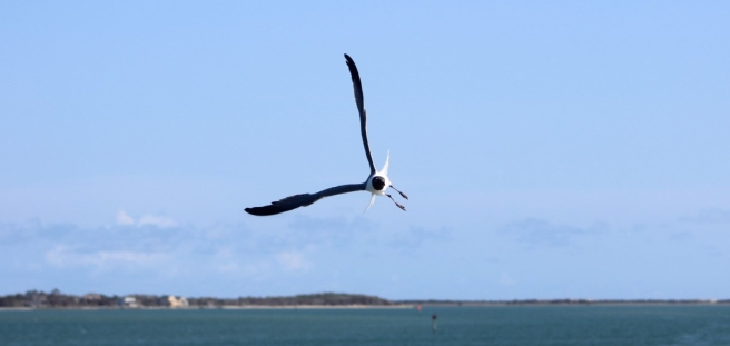 seagull flying behind a ferry