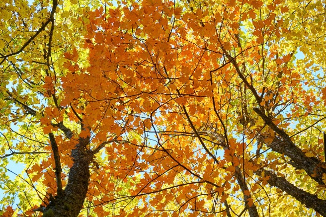 autumn-2955461_1280