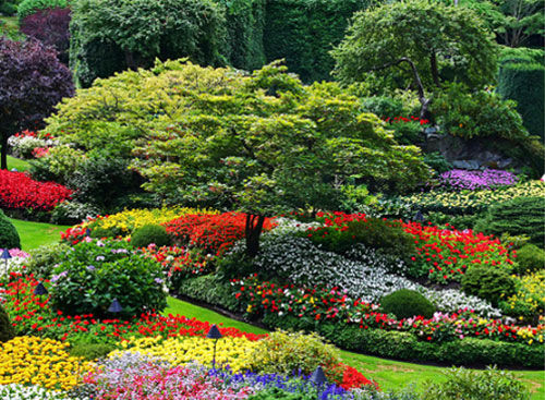 254317-Colorful-Landscaped-Garden