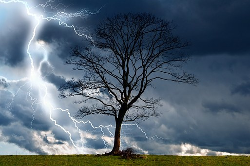 tree-164025__340