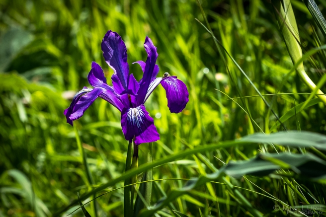Landscape Photography, Spring, Nature, Fujifilm X-T2, Art,