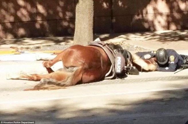 Policeman Comforts His Fallen Partner In Her Final Moments