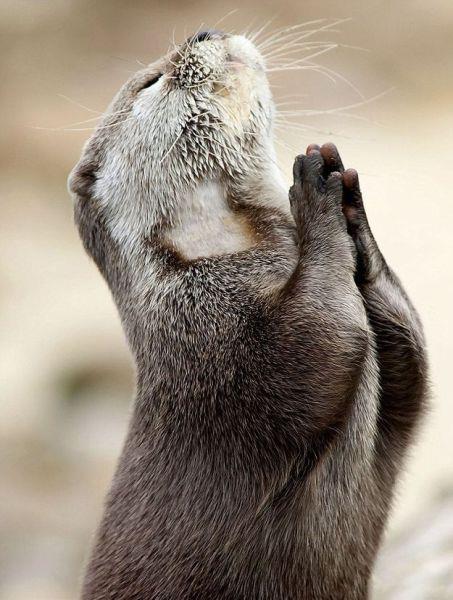 animal praying