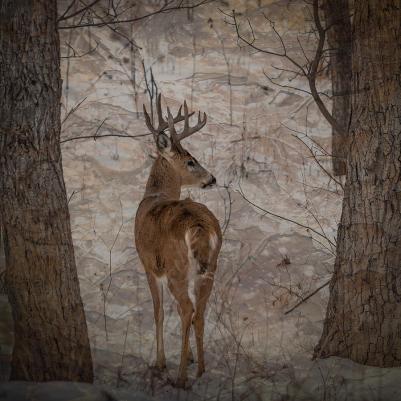 December Look Back Poetry 2019 Looking Back Buck