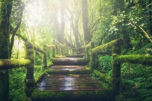 pathway-steps