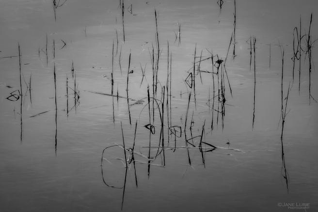 Black and White, Photography, California, Point Reyes, Fujifilm X-T2, Nature, Wildlife