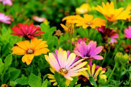beautiful-bloom-blooming-298246