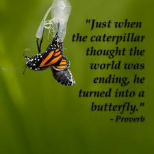 EMERGING AS A BUTTERFLY