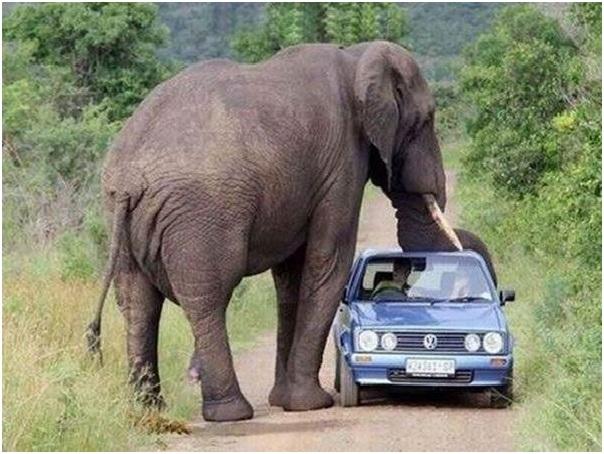 ELEPHANT INQUIRY