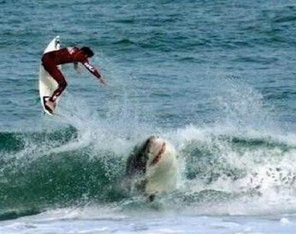 SURFER AND SHARK