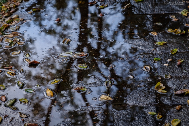 Nature, Photography, Rain, Close-up, Fujifilm X-T2