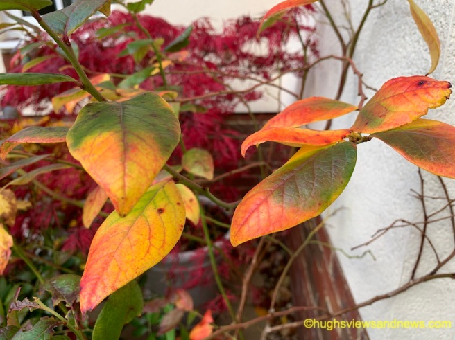 Photo of some autumnal leaves