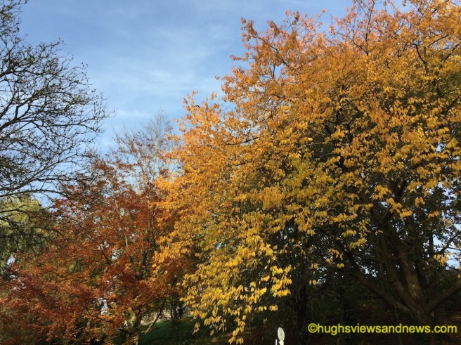 Photo of an autumn display on leaves on trees